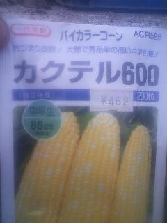 トウモロコシ 播種