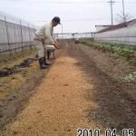 タマネギ 播種 (2010-04-05)