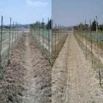 京野菜 ヤマノイモ敷き藁作業