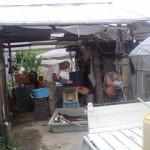 ネギ 播種 (2010-07-02)
