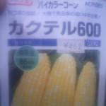 トウモロコシ 播種 (2011-05-10)