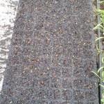 チンゲンサイ 播種 (2011-06-07)