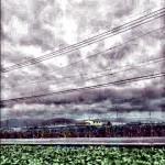 台風27号前にやっと今年の稲刈りが終わりそう。