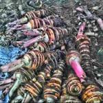 海老芋収穫開始2013