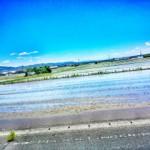 コメ 定植 (2015-06-05)