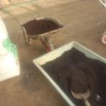 2016枝豆の播種。培地試験も兼ねる。