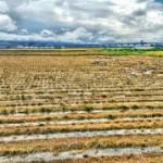 稲刈りのスピードと高齢化